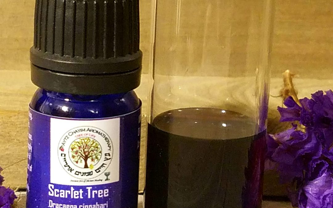 """Dracaena cinnabari """"Scarlet Tree"""" Essential Oil Extremely RARE- 5ml Also known as Dragon's Blood, Scarlet Resin"""